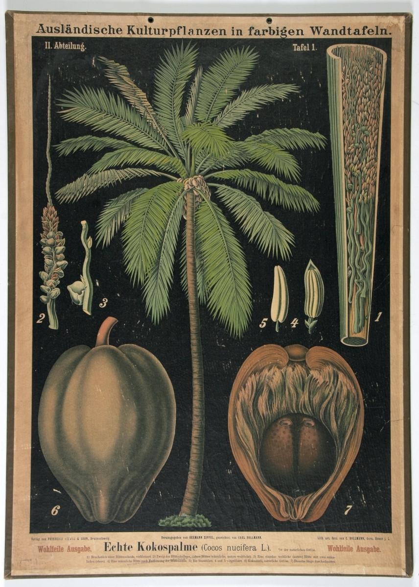 Ausländische Kulturpflanzen in farbigen Wandtafeln - II abteilung